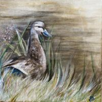 Female Mallard on a Restful Day by Schnellart