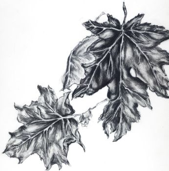Leaves by 17Blue