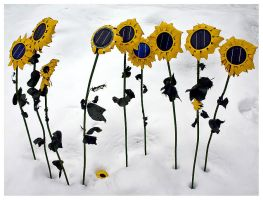 Winter Sunflowers by SuloinenEnkeli