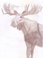 moose are hard animals to draw by BAC-of-all-trades