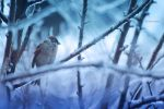 bird in winter.. by LemuriaFalls