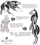 Lycan Anatomy01 by RedWolfmoon