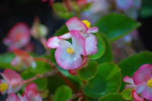 Little Pink Flowers by jrbamberg