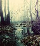 beauty forest by Dm3T-ShooG