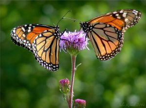 Butterfly Kisses by jewels4665