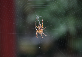 Spider on web2 by LeafsStock