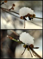 First Snow by Disintegrated8