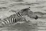 Swim for Survival by MorkelErasmus