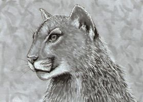Cougar - ACEO by Sofera