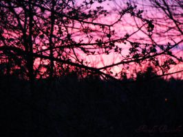 Purplish Pink Sunset by FriendlyButterfly