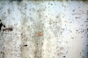 antique distressed texture II by beckas