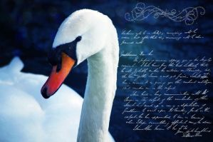 white swan of peace. by Miss-evill
