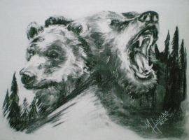 Northwest Grizzly Bears - Charcoal by MJHinrichs