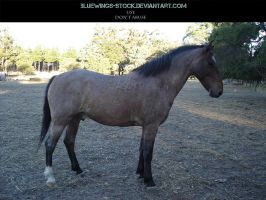 Roan Stock 1 by BlueWings-Stock