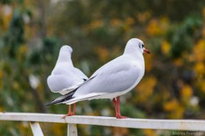 Seagulls by AndreaMetallurgico