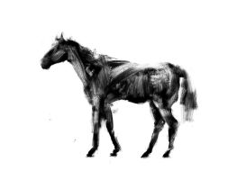 Horse study by Juhupainting