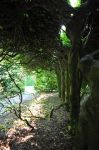 The Dryads of Levens Hall 2 by Forestina-Fotos