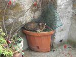 Cat in Calcata 2 by SciFiRocker