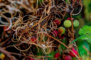 Tangled composition by aglezerman