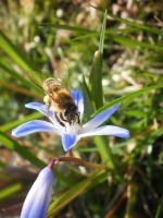 A Bee by tinuvielluthien