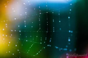 Color web by Minyaloth