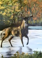 Acrylic Buck by Kuvari