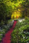 Pathway to Enlightenment by Capturing-the-Light