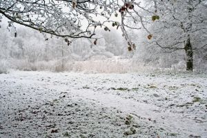 winterland 9 by priesteres-stock