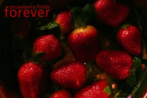 Strawberry Fields Forever by veritus5