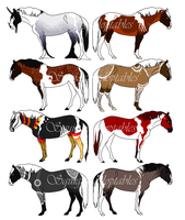 ~Horse Adoptables 3~ by Squiggy-Adoptables