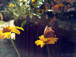 Photogallery 2015 - 28 butterfly by Ingnition by Ingnition