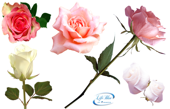 Romantic roses - PNG by lifeblue