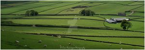 sheep farm by siliconesouls