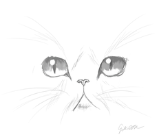 Hermione's cat sketch by PinkiePieZ