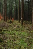 Forest Stock 044 by Malleni-Stock