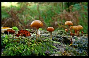 Gang of 'shrooms by bongaloid