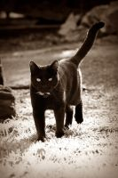 On the prowl by George---Kirk
