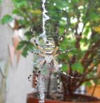 Spider by Aliwyn