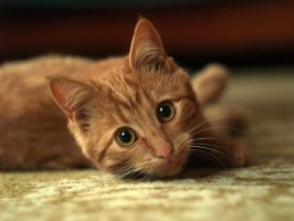 my new cat by Enkidulan
