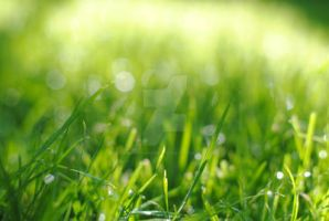 Dewy Grass by MaePhotography2010