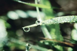 Dew of the morning by msteenphotographer