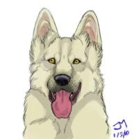 white shepherd by werewolfXluvr
