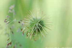 Spiky Flower 4 by M-L-Griffith