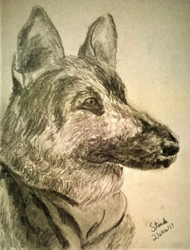 German shepherd by SulaimanDoodle