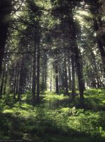 Forest [resized] by VanceaLouisa
