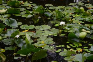 Frog Pond, Photography, 2014 by Moonbeam30024