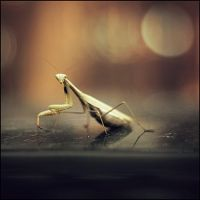 autumn forest: mantis II by amsterdam-jazz