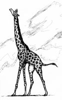 Giraffe by clearwater-art