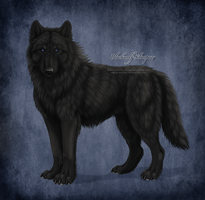 Blackwolf Silverpaw by Sidonie
