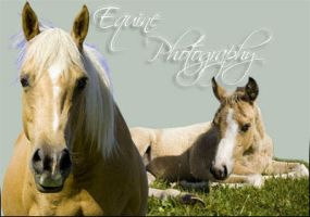 Equine Photography ID by silivrenwolf